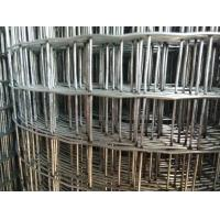 Cheap 3/4'' Mesh 1.2m * 25m   Chicken Galvanised Welded Wire Mesh Fencing for Iraq Market for sale