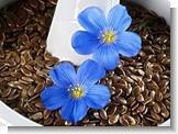 Cheap Flax Seed Extract Lignans 20%-80% for sale