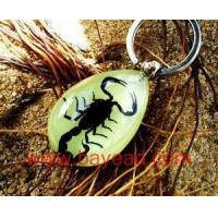 Cheap Real insect Scorpion Amber Keychain For Promotion Gift,novel gift,novel souvenir, for sale