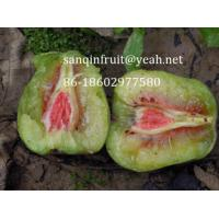 Cheap red kiwi seedlings red kiwi plant grafted kiwi seedlings red pulp kiwi fruit seedlings pulp for sale