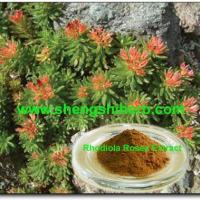 Cheap Rhodiola Rosea Extract for sale