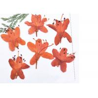 Buy cheap Unique Dried Pressed Flowers Multi Color Teaching Specimens Plants For 3D Art Painting from wholesalers