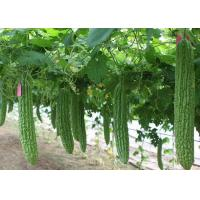 Natural Bitter Melon Extract Glycosides Natural Health Supplements Pharmaceutical Grade