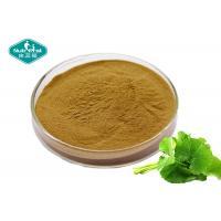 Cheap Cosmetic Grade Centella Asiatica ( Gotu Kola ) High Purity Extract For Skin Care for sale