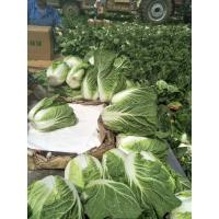 Cheap Agricultural Clean Fresh Chinese Cabbage Very Low In Calories 1kg / Per for sale