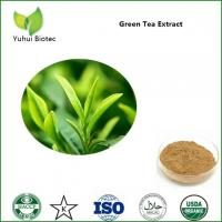 China green tea extract,green tea extract powder,bio green tea extract,green tea extract egcg on sale