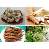 China CHINESE MEDICINE DONG QUAI ANGELICA SINENSIS RADIX FOR SALE on sale