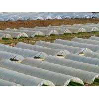 Cheap tunnel film greenhouse wholesale