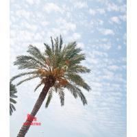 Cheap palm tree tower for sale