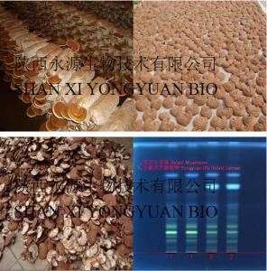 China Factory Supply 10% Polysaccharides; Red reishi mushroom powder; Ganoderma lucidum extraction on sale