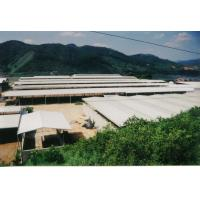 Temporary Agricultural Steel Frame Buildings , Light Heavy  Multi Storey Steel Structure Building