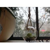 Cheap Clear Glass Hanging Terrarium / Hanging Glass Plant Holders Anti Corrosion for sale
