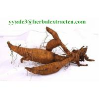 China Kudzu Root extract, flavones UV, Puerarin HPLC, CAS No.: 3681-99-0, Pueraria extract, Shaanxi Yongyuan Bio on sale