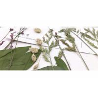 Cheap Original Wild Grass Weed Large Pressed Flowers For Aroma Wax Candles for sale
