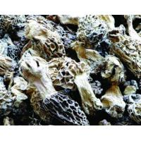 Frozen Morchella Conica