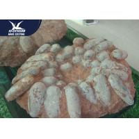 Buy cheap Real Large Dinosaur Fossil Replicas Customized Color And Size CE RoHS Certificat from wholesalers