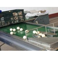 Cheap Automatic 1-6 Lines Egg Stamping Machine Inkjet Coding Machine 1200x280x200mm for sale
