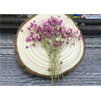 Cheap DIY Handmade Long Dried Flowers , Babys Breath Materials Real Dried Flowers for sale