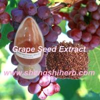 Cheap Grape Skin Extract for sale