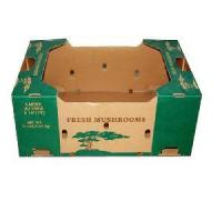 Cheap Fresh Mushrooms Packaging Carton (FC-CDB-20) for sale