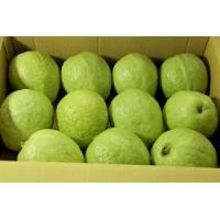 Cheap Guava fruit for sale