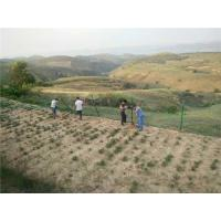 Cheap Environmentally Friendly Green Vinyl Coated Welded Wire Fencing For Slope Protection for sale