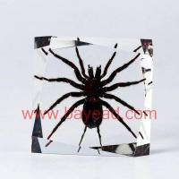 Cheap Insect Amber  Desktop decoration(deocratoin, Crafts, Gifts, Souvenir , Novelties, Gift Promotion) for sale