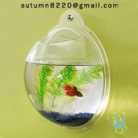 Cheap acrylic wall mount fish bowl for sale