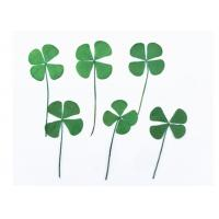Buy cheap Clover Specimens Framed Pressed Flowers , Green Dried Flowers DIY Handmade Material from wholesalers