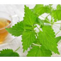 China Nettle Extract Silica Acid 1%,7%,10:1 on sale