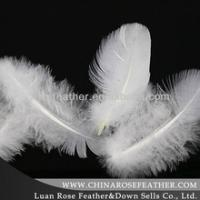 washed white goose feather 2-4cm