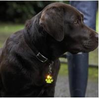 Cheap LED Pet /Dog ID Tag with 4 Red Flashing Lights for sale