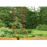 Cheap Durable Garden Metal Tomato Cages for sale