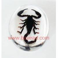 Quality Real insect amber Paperweight,office gifts,business gifts,Corporate Gifts wholesale