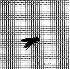 Cheap Fiberglass Mosquito Screen for sale