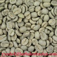 Cheap Green Coffee Bean Extract herbal extract  powder for sale