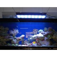 Cheap Apollo Aquarium LED Light for Coral (Apollo-10) for sale