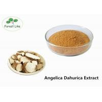 Cheap Radix Angelicae Extract Powder Relieve Pain / Herbal Medicine Plant Based Powder for sale