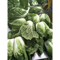 Cheap Delicious Chinese Manufactured Cabbage , Cruciferous Chinese Flowering Cabbage for sale