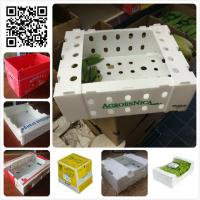 Cheap 5kgs 10lbs pp corflute coroplast vegetable fruit packaging box for sale
