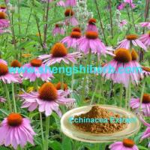 Cheap Echinacea Extract/Echinacea Purpurea Extract for sale