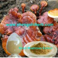 Cheap Reishi Extract for sale