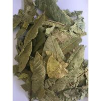 Cheap Guava Leaf,Immature fruit of Guava,Immature fruit of Common Guava for sale