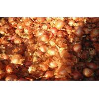 Quality 2cm - 5cm Yellow / Red Asian Shallots Round Containing Water , Sugar, spicy pure wholesale