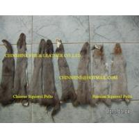 Quality Squirrel Pelts Dressed In Natural Color wholesale