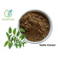 China Factory Supply Rich Silica and Phytosterols Stinging Nettle Root Extract on sale