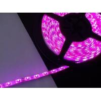 Cheap 3528/5050 LED Strip Light/Flexible Strip Light for sale