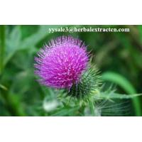 Milk Thistle Extract  Acetone<30ppm   Silymarin 80% UV, CAS NO.:65666-07-1, manufature supply, Yonyuan Bio-Tech