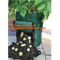 China vegetables, fruits, seeds, bedding plants, tomatoes, peppers, cucumbers, tree starters, potato bag, Hydroponics Garden on sale