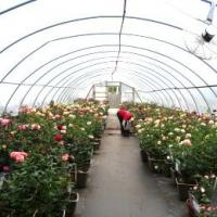 Cheap flower greenhouse wholesale
